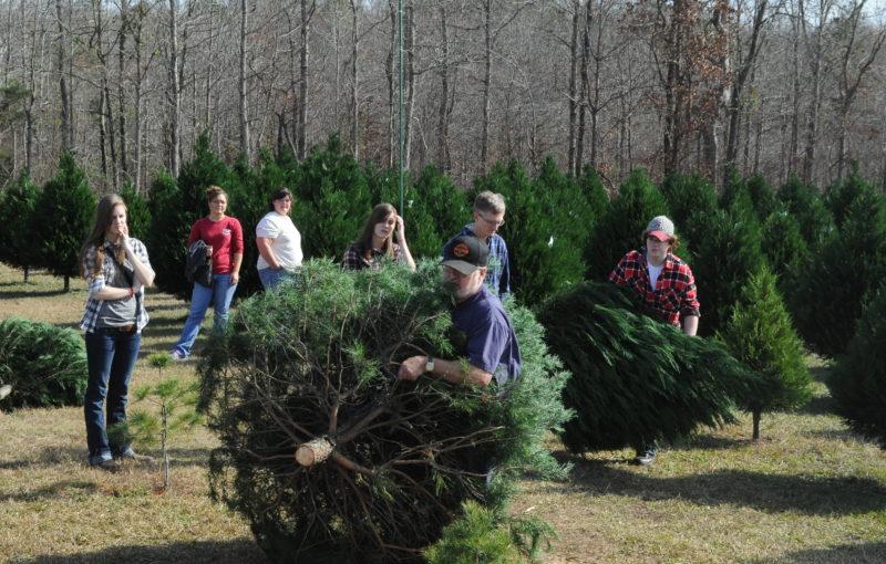 christmas tree selecting tips - Christmas Tree Farms Near Me